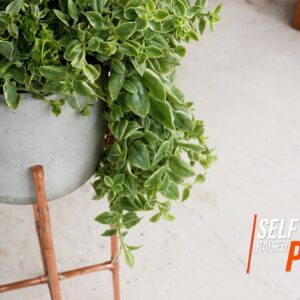 Self watering concrete planter (with EASY DIY Automatic Watering hack)